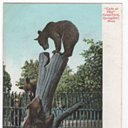 Cubs at Play Forest Park Springfield MA Massachusetts Postcard