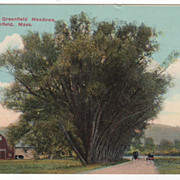 The Willows Greenfield Meadows Greenfield MA Massachusetts Vintage Postcard
