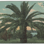 Bryant & Greenwood Land Offer Palm Beach County FL Florida Vintage Postcard