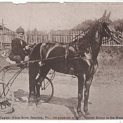 Horse Charles Taylor 101 Year Old Driver White River Junction VT Vintage Postcard