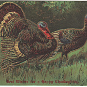 SOLD Turkey Gobbler and Turkey Hen in a Meadow Vintage Thanksgiving Postcard - Red Tag Sale It