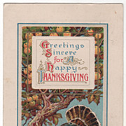 Winsch Apple Tree and Apples Very Large Turkey Gobbler Vintage Thanksgiving Postcard