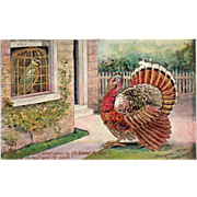 Turkey Gobbler Talking to a Parrot in a Cage Vintage Thanksgiving Postcard