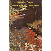 Spearfish Canyon Northern Black Hills SD South Dakota Vintage Postcard