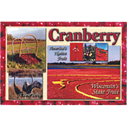 "Cranberry ""Crane""berry Native Fruit State Fruit of Wisconsin WI Vintage Postcard"
