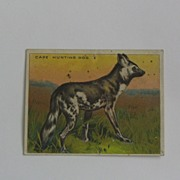 Hassan Cork Tip Cigarettes Trade Card Cape Hunting Dog