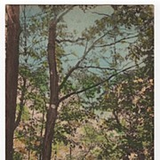 Lover's Lane Helderberg Mts New York NY Postcard