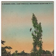 Camp Pinnacle Helderberg Mts New York NY Postcard