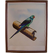 SALE 1970's Original Oil Painting Bird Parakeet Fine Art