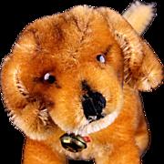 Steiff Little Sister Standing Bazi Dachshund Puppy Dog Glass Eyes