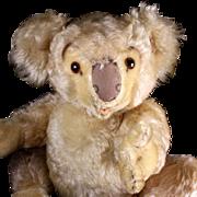 RARE! Biggest Brother Steiff 5xJointed Koala (NOT) Bear 1955-1961 ONLY