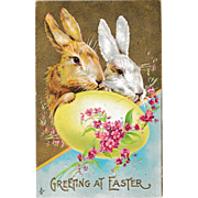 "Antique Stecher Easter Rabbits ""Greeting at Easter"" Postcard"