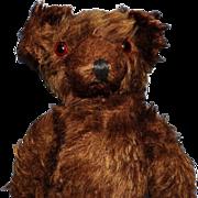 American Character Teddy Bear