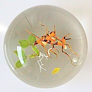 SOLD Paul Stankard Limited Edition Spider Orchid Paperweight