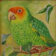Carolina Parakeet With Heart Leaf