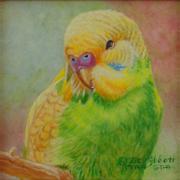 Green and Gold Parakeet/Budgerigar