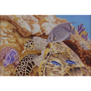 Dining on Coral - Hawksbill Sea Turtle