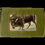 Souvenir Folder of Buffalo, N.Y.