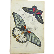 An Original Hand Colored Butterfly/Moth Print from The Naturalist's Library, Ca. 1830-1840