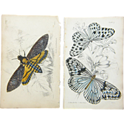 Two Original Hand Colored Butterfly/Moth  Prints from The Naturalist's Library, Ca. 1830-184