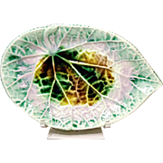 Lovely Etruscan Majolica Begonia Leaf Pickle Plate