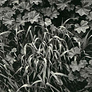 SOLD Ansel Adams 1974 1st Ed 'Singular Images' Polaroid Land Photographs - Art / Landscapes /
