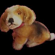 SOLD Rare Steiff Biggie Beagle, 1968 to 1975.Steiff Button
