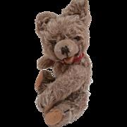 Hans. Hermann Zotty Type Teddy Bear, No Id's