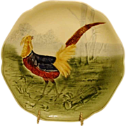 SALE Beautiful Majolica /Faience Pottery Cabinet Plate ~ Decorated with Colorful Pheasant ~ ..