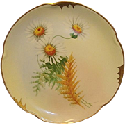 SALE Gorgeous Bavarian Porcelain Plate ~ Pickard Studio with Yellow Centered White Daisies ~ A