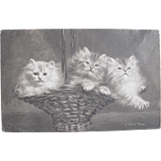 SALE THREE Post Cards Total Persian Cats Artist Signed