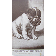 SALE Puppy Post Card Real Life Photo