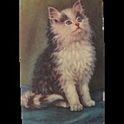 SALE Artist Signed Postcard of Black and White Cat Unused