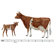 Early 1900s DeLaval Tin Lithographed Guernsey Cow and Calf Advertising Set