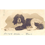 1904 Too Cute  Real Photo Postcard Dog Taking It East, Cocker Spaniel?
