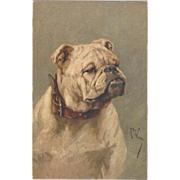 SOLD c1920 Too Cute Art Postcard signed ARTHUR WARDLE English Bulldog