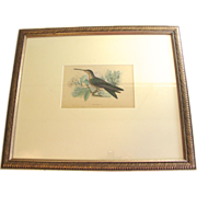 SALE Beautiful Hand-Colored Engraving of Hummingbird