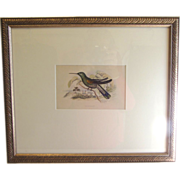 SALE Beautifully Framed Hand-Colored Engraving of Hummingbird