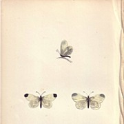 REDUCED Lovely Hand-Colored Engraving Butterfly WOOD WHITE, Morris