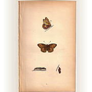 REDUCED Lovely Colored Plate from Morris Butterfly Book, QUEEN OF SPAIN FRITILLARY