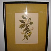 SALE Lovely Framed and Matted Audubon Bird Print, CANADA WARBLER