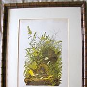 SALE Lovely Framed Audubon Print, MEADOW LARK