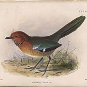 SALE 1875 Hand-Finished Color Lithographs John G. Keulemans, PZS