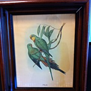 SALE Wonderfully Framed J. Gould Parakeet Print by Sidney Z. Lucas