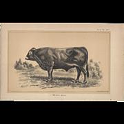 Bi-Color Lithograph c. 1888 Julius Bien FRENCH BULL
