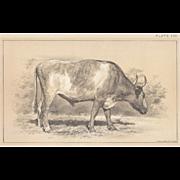 SALE Bi-Color Lithograph GRAY OX Julius Bien 1888