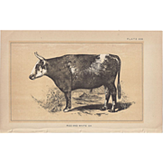 SALE Bi-Color Lithograph Red and White OX c. 1888 Julius Bien