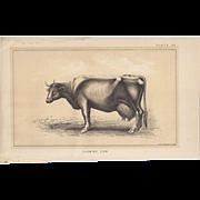 SALE Bi-Color Lithograph FLEMISH COW c. 1888 Julius Bien