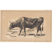 SALE Bi-Color Lithograph PINZGAUER RACE c. 1888 Julius Bien