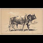 SALE Bi-Color Lithograph Bavarian Working CATTLE c. 1888 Julius Bien